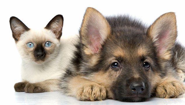 Pet Dander is a Common  Asthma Trigger